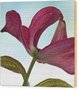 Dogwood Ballet 3 Wood Print