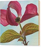 Dogwood Ballet 4 Wood Print
