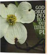 Dogwood Bloom / Flower Wood Print