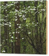 Dogwood Blooming In Forest Wood Print