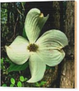 Dogwood Blossom I Wood Print by Julie Dant