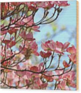 Dogwood Flowering Trees Pink Dogwood Flowers Baslee Troutman Wood Print