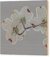 Dogwood Flowers 3 Wood Print