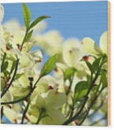 Dogwood Flowers Art Prints Canvas White Dogwood Tree Blue Sky Wood Print
