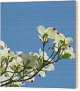 Dogwood Flowers Art Prints White Flowering Dogwood Tree Baslee Troutman Wood Print