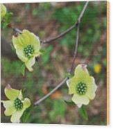 Dogwood Flowers Wood Print