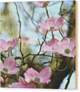 Dogwood Flowers Pink Dogwood Tree Landscape 9 Giclee Art Prints Baslee Troutman Wood Print