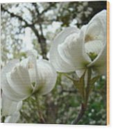 Dogwood Flowers White Dogwood Trees Blossoming 8 Art Prints Baslee Troutman Wood Print