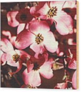 Dogwood Harmony Wood Print