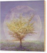 Dogwood In The Lavender Mist Wood Print