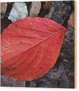 Dogwood Leaf Wood Print