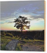 Dogwood On Little Round Top Wood Print