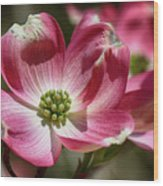 Dogwood Spring Wood Print