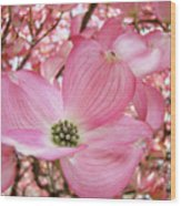 Dogwood Tree 1 Pink Dogwood Flowers Artwork Art Prints Canvas Framed Cards Wood Print
