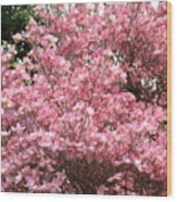 Dogwood Tree Flowers Art Prints Canvas Pink Dogwood Wood Print