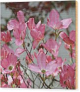 Dogwood Trees Flower Blossoms Art Baslee Troutman Wood Print