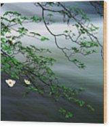 Dogwoods And Merced River Wood Print