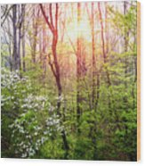 Dogwoods In The Forest Wood Print