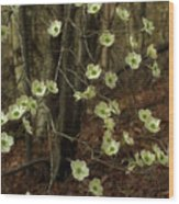 Dogwoods In The Spring Wood Print