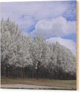 Bradford Pear Trees On Display Wood Print