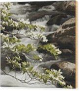 Dogwoods Over Cascades  Wood Print