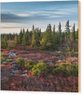 Dolly Sods Wilderness Area West Virginia Wood Print