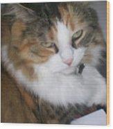 Dolly The Grumpy Cat Wood Print