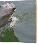 Dolphin At Play Wood Print