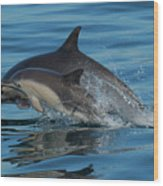 Dolphin Baby Flight Wood Print
