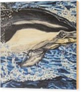 Dolphin Blue Wood Print