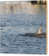 Dolphin By The Dock Wood Print