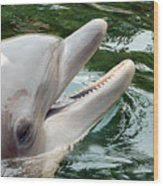 Dolphin Charm Wood Print