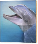 Dolphin In The Moonlight Wood Print