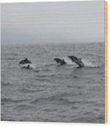 Dolphin Joy 2 Wood Print