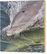 Dolphin Pair Wood Print