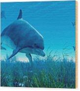 Dolphin Pod Wood Print