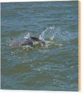 Dolphin Race Wood Print