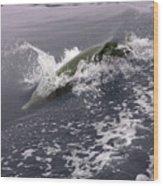 Runnin' Dolphin  Wood Print