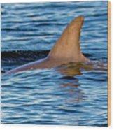 Dolphin Sighting Wood Print