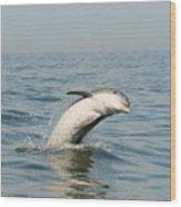 Dolphin Splash Wood Print