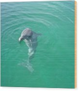 Dolphin Upclose Wood Print