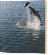 Dolphin Watch Wood Print