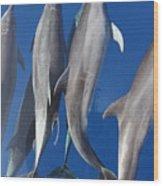 Dolphin2 Wood Print