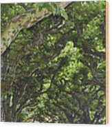 Dome Of Trees Wood Print