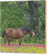 Domestic Horse In Field Of Wildflowers Wood Print