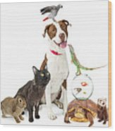 Domestic Pets Group Together With Copy Space Wood Print