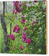 Domestic Rose Gone Wild Wood Print