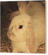 Domesticated Rabbit Wood Print