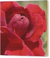 Dominica Red Rose Wood Print