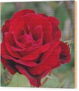 Don Juan Climbing Rose Wood Print